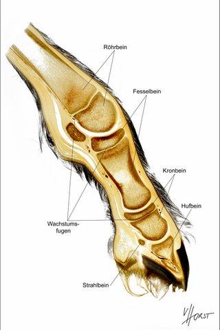 morphology specimen