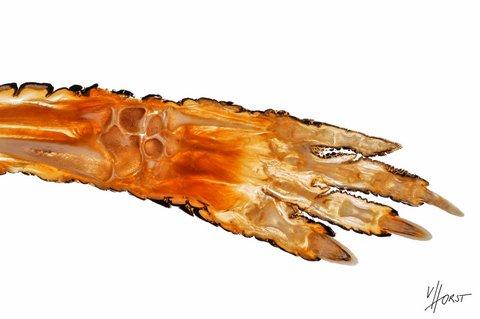 reptile morphology specimen